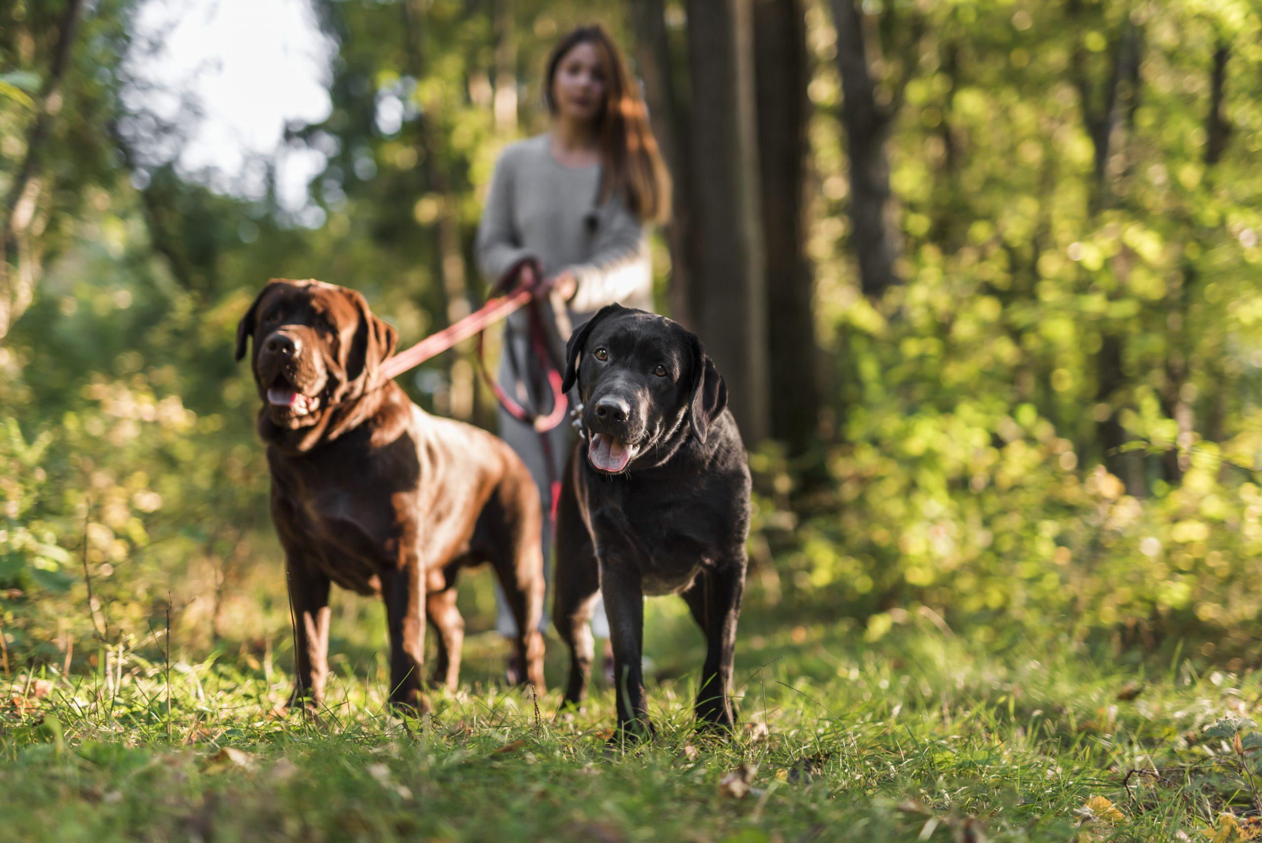 Pets em condomínio: o que é preciso saber?
