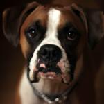 Maus tratos de animais: lei obriga síndicos a comunicar