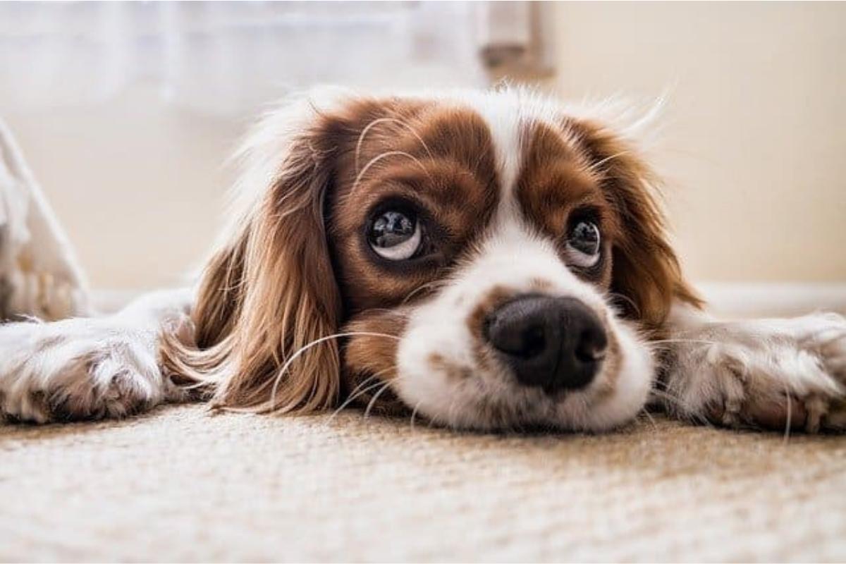 Pets em condomínios: entenda mais sobre o assunto